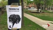 Play video: Trees to be cut down ahead of Fredericton construction season