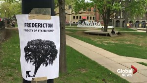 Trees to be cut down ahead of Fredericton construction season
