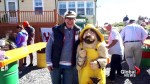 Popular Peggy's Cove mascot stolen