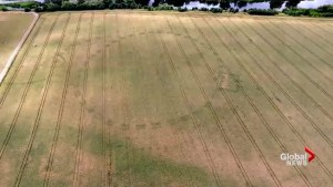 Unusual weather patterns reveal archeological find in Ireland