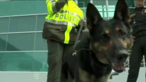 Colombian gang puts bounty on drug-sniffing dog's head