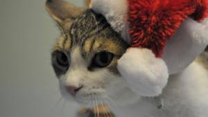 Cats to find homes for the holidays