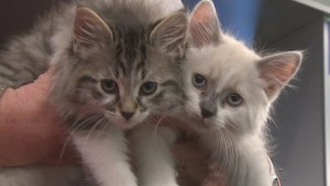 Adopt a Pet: Four little kittens looking for homes