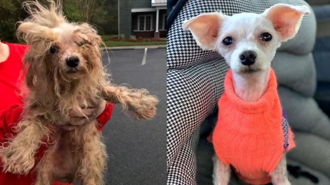 700 dogs rescued from 'extreme hoarding puppy mill' in Georgia