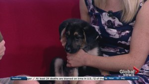 Adopt a Pal: Three puppies looking for homes