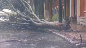 Hurricane Florence: North Carolina town sees toppled trees, heavy flooding as storm hits