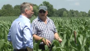 Weather or not: Lack of rain hurts local corn crops