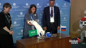 Psychic cat picks winner of FIFA 2018 World Cup opener