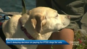 Despite government report showing 'significant' reduction in PTSD, veterans denied service dogs