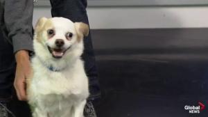 Edmonton Humane Society: Tucker & Missy