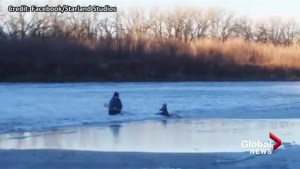 Video catches dramatic deer rescue from Red Deer River