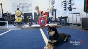 Calgary gym members enjoy canine company during workouts: 'Makes it a lot more fun!'