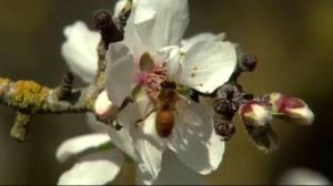 Honeybee colonies face uncertain future