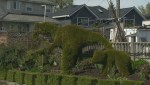 Squire Barnes visits Burnaby's self-taught master of topiary