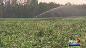 Protecting Alberta's farmland