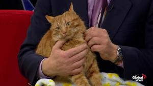 Edmonton Humane Society: Spike & Thomas O'Malley