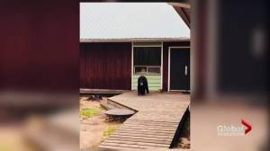 Woman attacked by bear in Meadow Lake Provincial Park