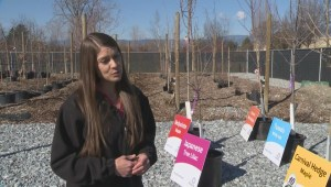 NeighbourWoods program provides subsidized trees to City of Kelowna residents