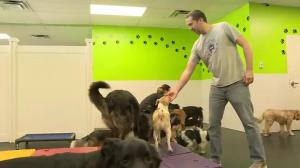 Doggy daycares filling up due to frigid outdoor conditions