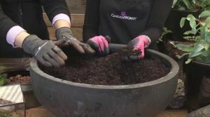 GardenWorks: Fernarium