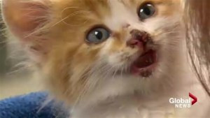 'It makes my stomach turn': 6-week-old kitten apparently thrown from moving vehicle