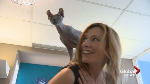 Hairless cat steals the show at Calgary hair salon