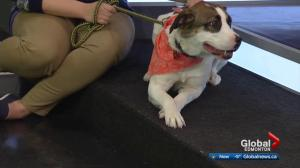SCARS looks for a home for a pair of dogs