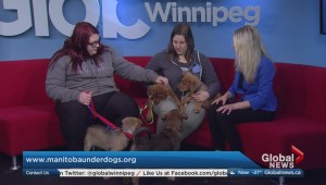 Adopt a Pal: Manitoba Underdogs Rescue