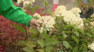 Gardening Tips: fall planting and lawn preparation