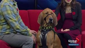 Calgary Humane Society Pet of the Week: Roscoe