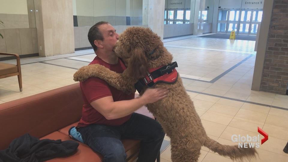 Former Nb Deputy Chief Coroner Launches Ptsd Service Dog