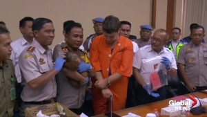 Russian man faces jail time after failed attempt to smuggle baby orangutan