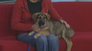 Adopt a Pet: Blossom needs a home