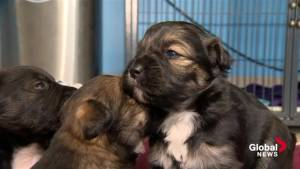 'It's an excruciating death': SPCA reminding people to keep pets inside during cold temperatures