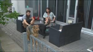 Toronto woman claims sighting of missing capybara