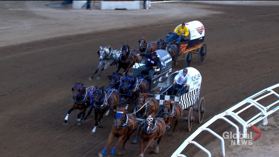 Second Horse Dies At 2019 Calgary Stampede Chuckwagon