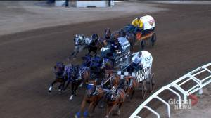 Calls for changes to chuckwagon races at Calgary Stampede after second horse death