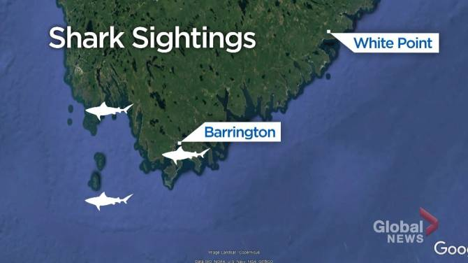 Alleged Nova Scotia shark encounter forces surfers to walk 3 km back to vehicles