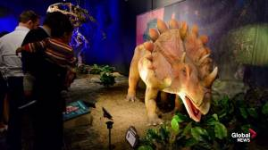 TELUS World of Science's Dinosaurs Unearthed: Down to the Bone exhibit