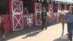 Okanagan 4H stock show takes place in Armstrong