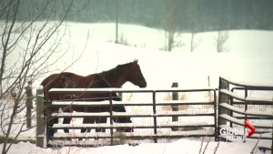 Second person charged in Parkland County animal abuse case