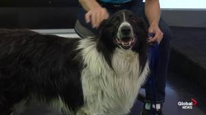 Edmonton Humane Society: Oscar