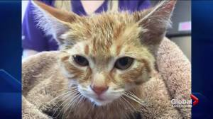 Man tossed from Craven Country Jamboree after allegedly abusing a kitten