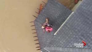 Dog Houston Roof Rescue