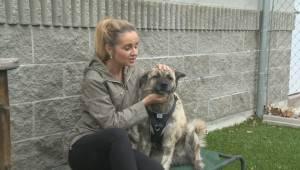 Adopt a Pet: Maude