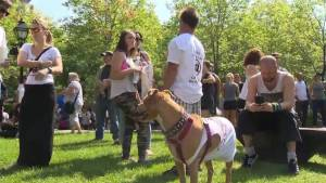 Montrealers rally against looming pit bull ban