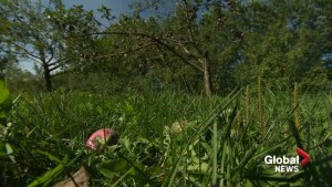 Hudson apple orchard damaged after storm