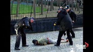 Armed police detain man inside grounds of British parliament