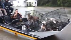 Police rescue animals stranded at flooded shelter