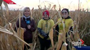 Jodi Hughes live at the Cobb's Corn Maze